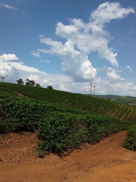 Fazenda Corrego do Macedo