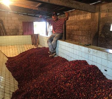 reife-kaffeekirschen-im-fermentationsbecken.jpg