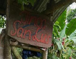 rohkaffee-von-der-finca-san-luis-in-tolima-kolumbien.jpg