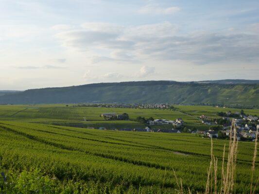 Leiwen an der Mosel Weinfelder